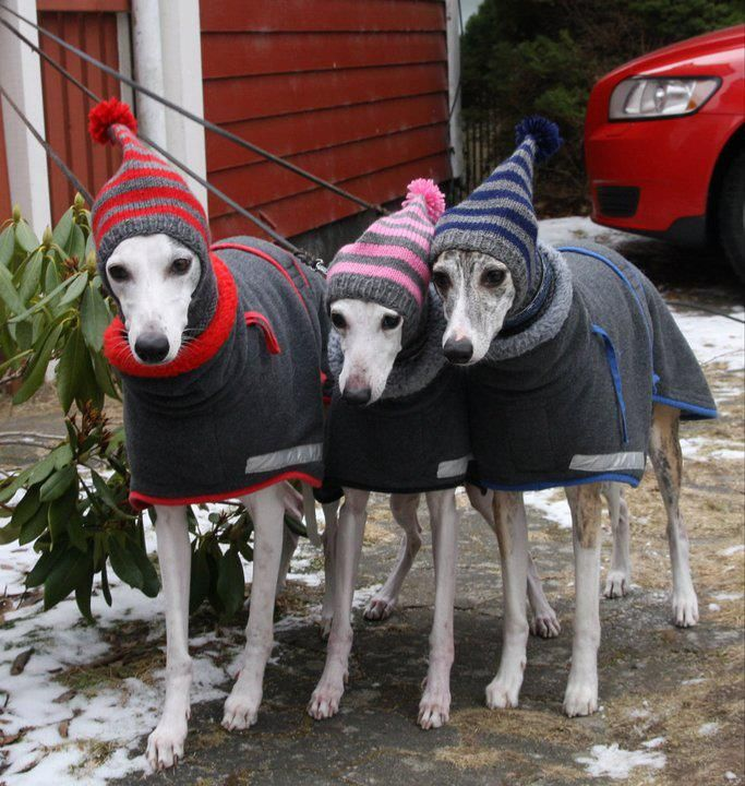 greyhound snood/hats