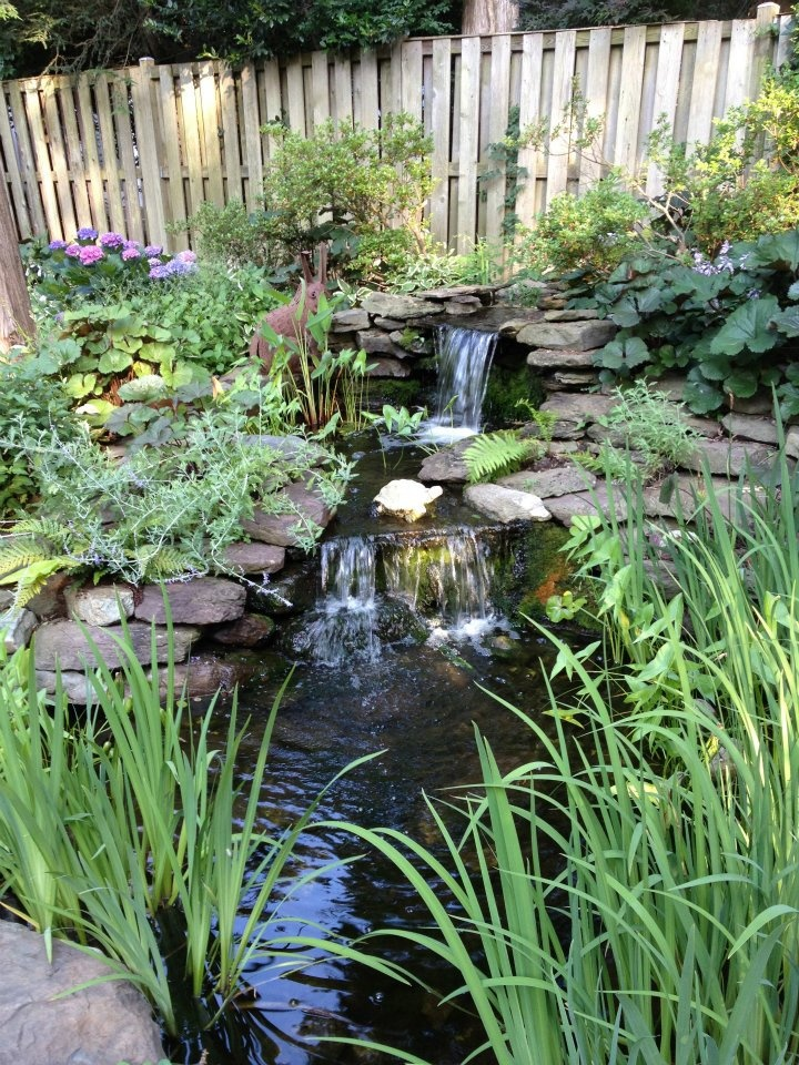 68 best images about water garden on pinterest above for Pond shade ideas