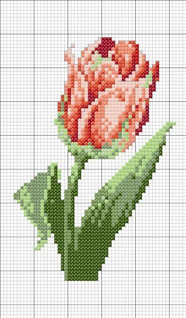 Specs case tulip