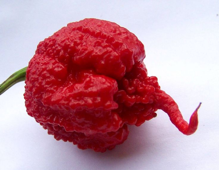 The Carolina Reaper was rated as the world's hottest chilli pepper by Guiness…