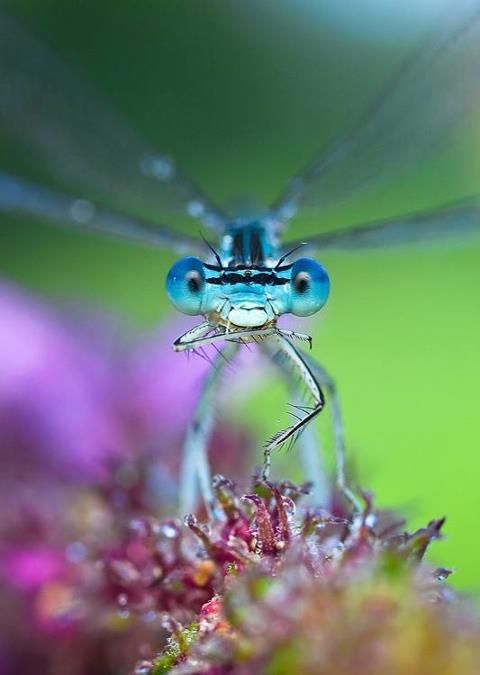 Beautiful dragonfly loves you. Loves to EAT you!