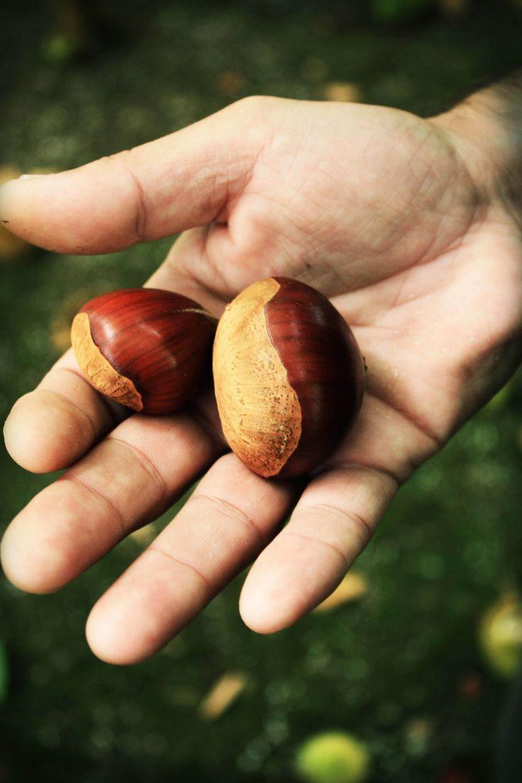 chestnuts © Mónica Pinto