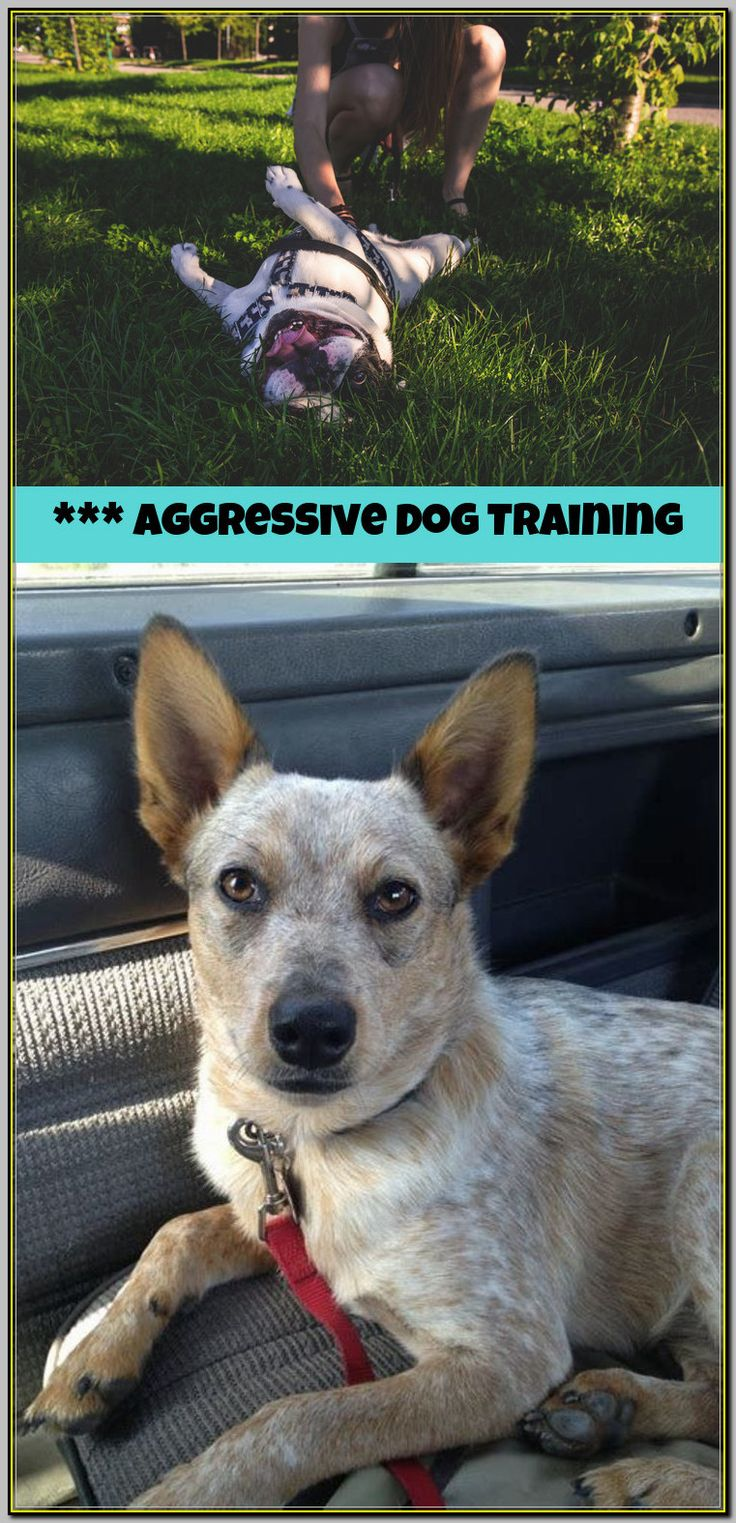 Do You Need an Aggressive Dog Trainer?