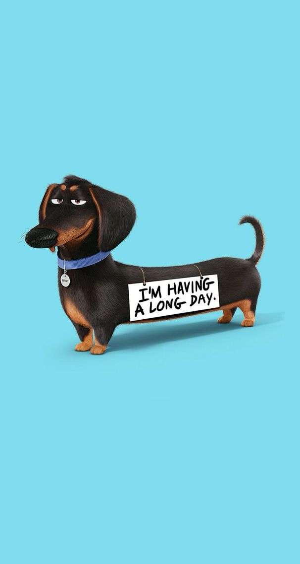 Funny Wallpaper Iphone Dachshund Puppy Wallpaper Iphone Cute