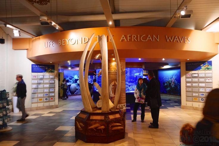 """In Kapstadt unters Meer und auf den Berg Als ich 2004 das erste Mal in Kapstadt war, besuchte ich das """"Two Oceans Aquarium"""" und war damals begeistert. Das Wetter war für heute schlecht angesagt und da die Sonne nicht schien dachte ich mir, nach elf Jahren kannst du dir auch wieder einmal das Two Oceans Aquarium ansehen. https://www.overlandtour.de/in-kapstadt-unters-meer-und-auf-den-berg/..."""