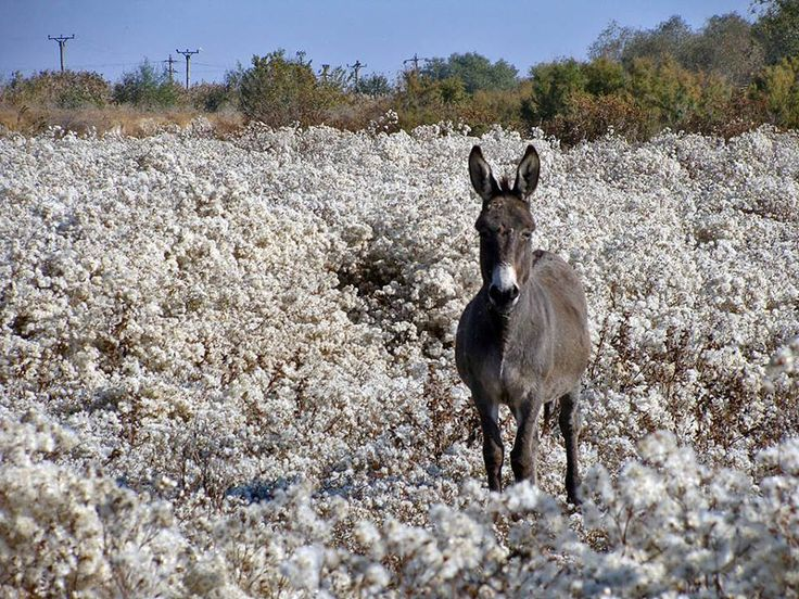 Just gorgeous ! - a donkey from Zebil, Tulcea, Romania.Via Dobrogea FB page.