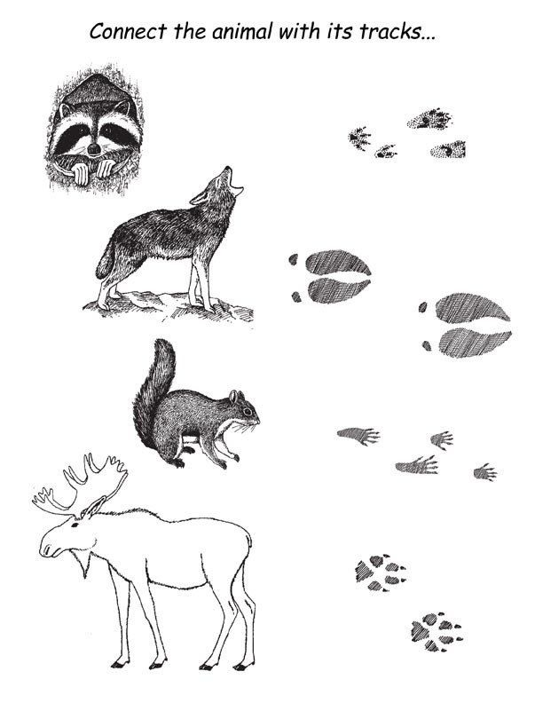 Animal Track Coloring Pages Animal Tracks Clipart Zoo Animal Coloring Pages Animal Tracks Animals