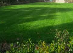 turf suppliers essex - http://www.paynesturf.co.uk/about-paynes-turf/