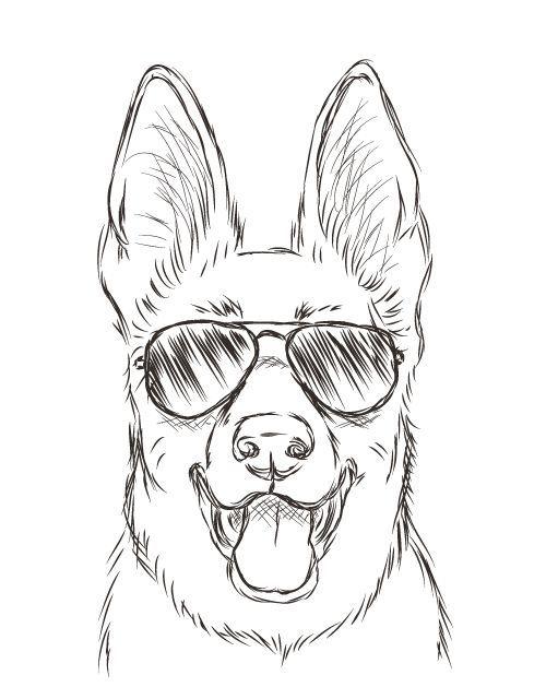 Dogs Stuff