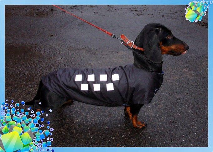 Алиэкспресс одежда для собак таксы