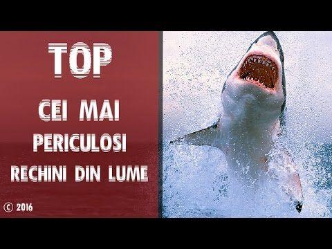 TOP ¿ - Cele mai PERICULOASE specii de RECHINI din LUME