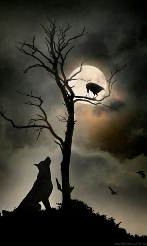 night wolf phone wallpapers Raven and wolf, Moon tattoo