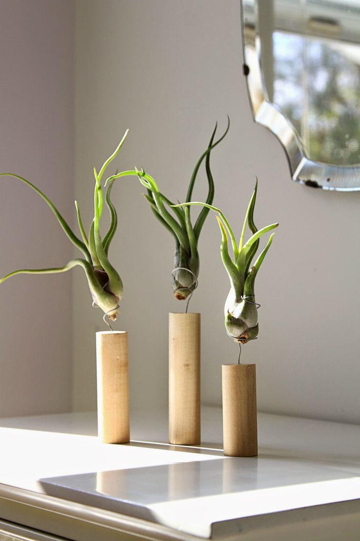 c@sas de pelicula: Tillandsias: Plantas aéreas para oxigenar tu espacio de trabajo.