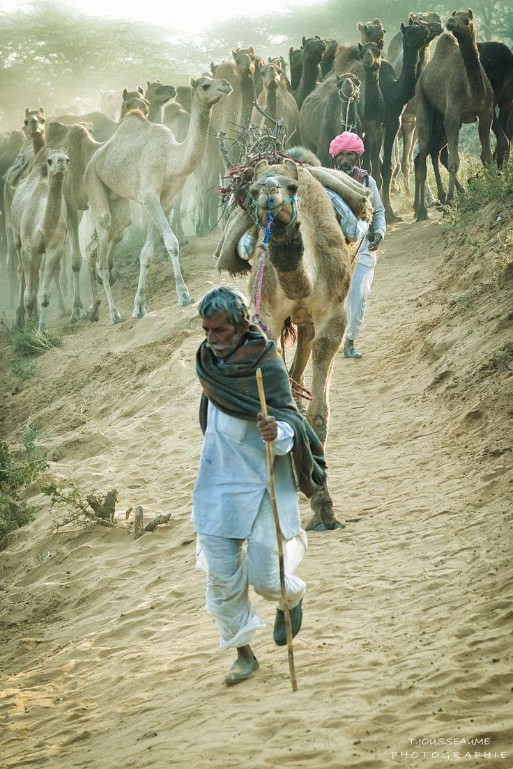 Pushkar Camel Fair, India