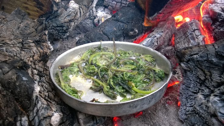 Hogweed shoots fried in butter on an open fire is one of the great wild food treats of the year