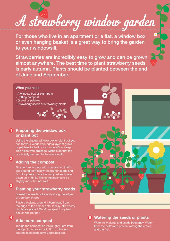 The 8 Best Images About Home & Garden Infographics On Pinterest