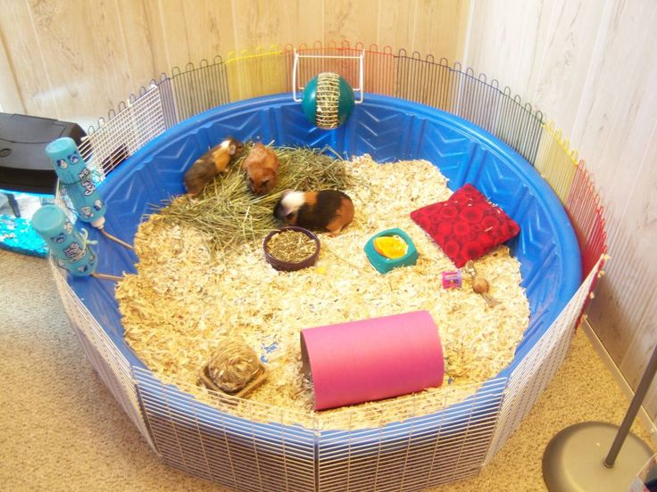 homemade pool cage! - Guinea Pig Cage Photos. To have this as a rabbit cage all you have to do is make the cage around it bigger.