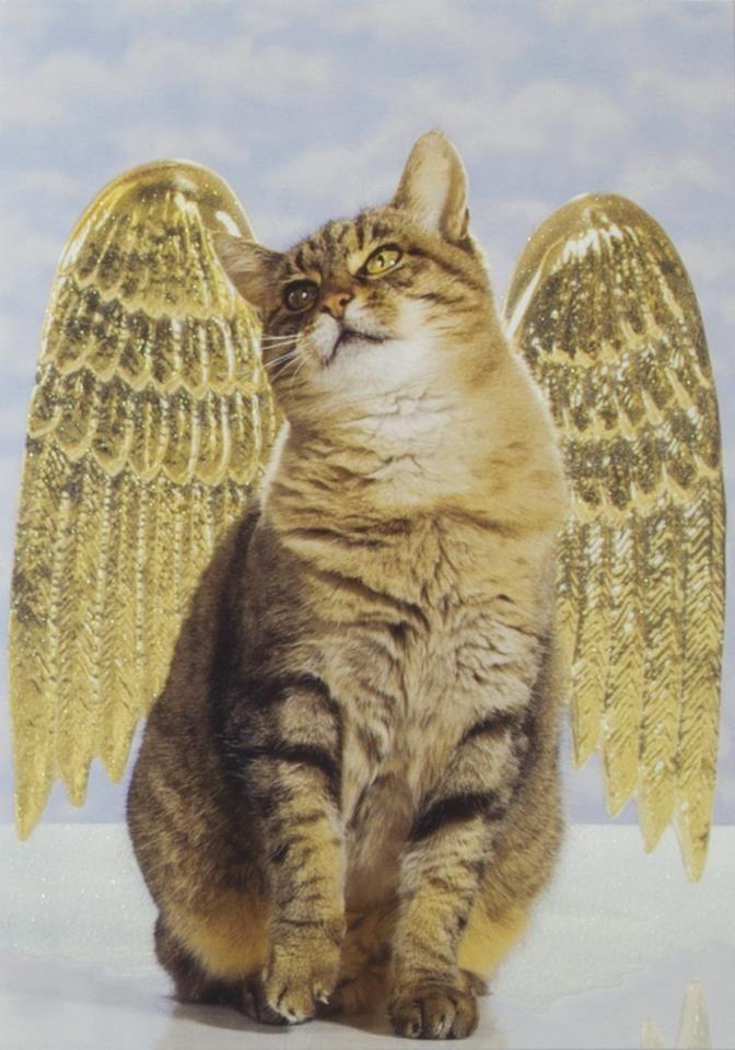 Archangel Michael ~ THE INCOMING WAVE OF LIGHT & THE LION'S GATE 2013 through Celia Fenn   Archangels and Devas