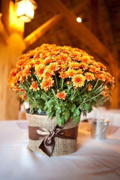 25 best ideas about potted plant centerpieces on pinterest plant centerpieces gypsophila - Potted autumn flowers ...