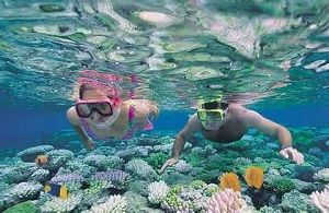 Great Barrier Reef - Snorkelling