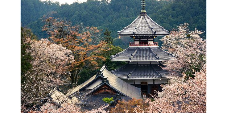 It's hard to beat Japan when spring is blooming across the country, and as the cherry trees begin to flower, the sound of celebrations flow through the cities with festivals and spectacles paying tribute to Japanese nature and culture. See our list of eight undeniable reasons to visit the Land of the Rising Sun this spring.