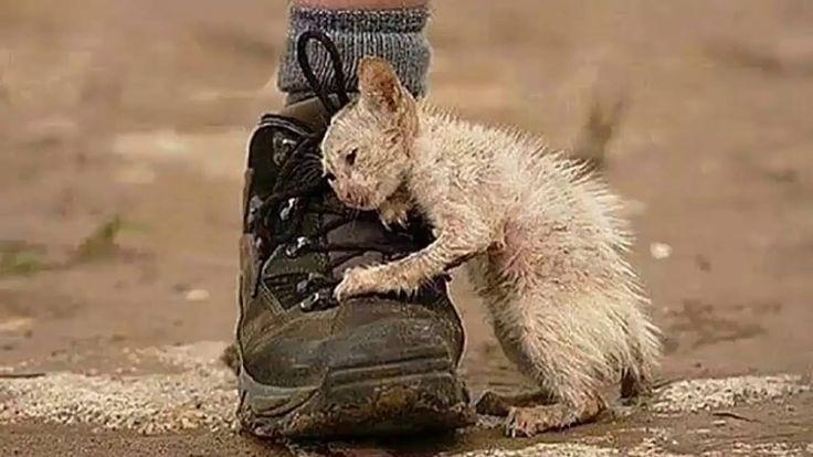 Real Life Heroes ★ When people help animals PIES POMAGA RYBIE:   https://de.pinterest.com/pin/385550418073277380/ kot i papuga : https://www.facebook.com/1555821107777101/videos/1622145904477954/