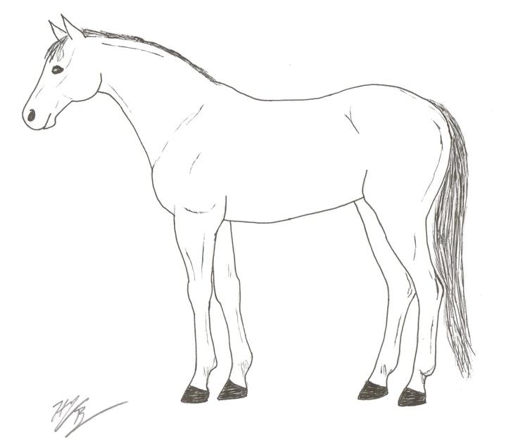 basic horse anatomy diagram
