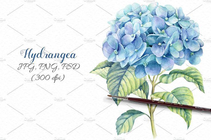Watercolor blue hydrangea by Ponomarchuk Art on @creativemarket
