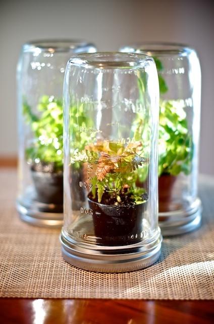 mason jar terrariums, seedling ideas
