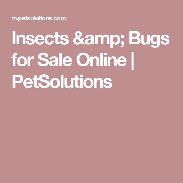 Insects & Bugs for Sale Online | PetSolutions