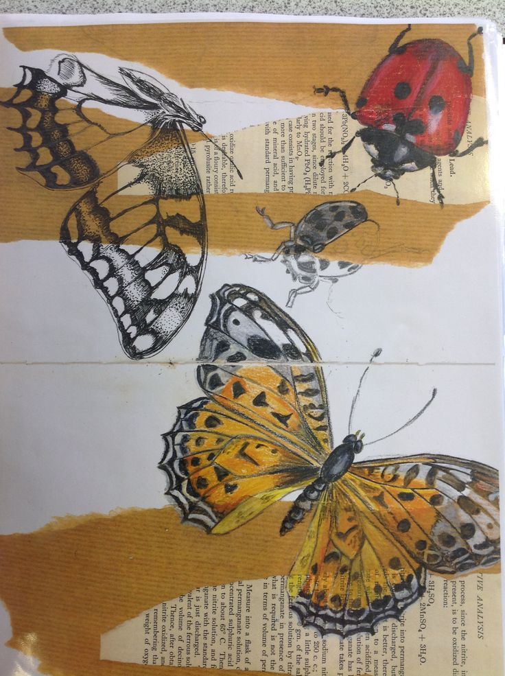 1000 images about year 10 fine art sketchbook ideas for Ideanature