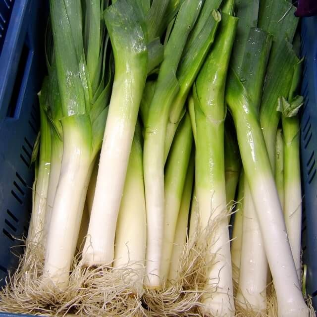 LEEKS - Verdonnet. Swiss landrace, improved.