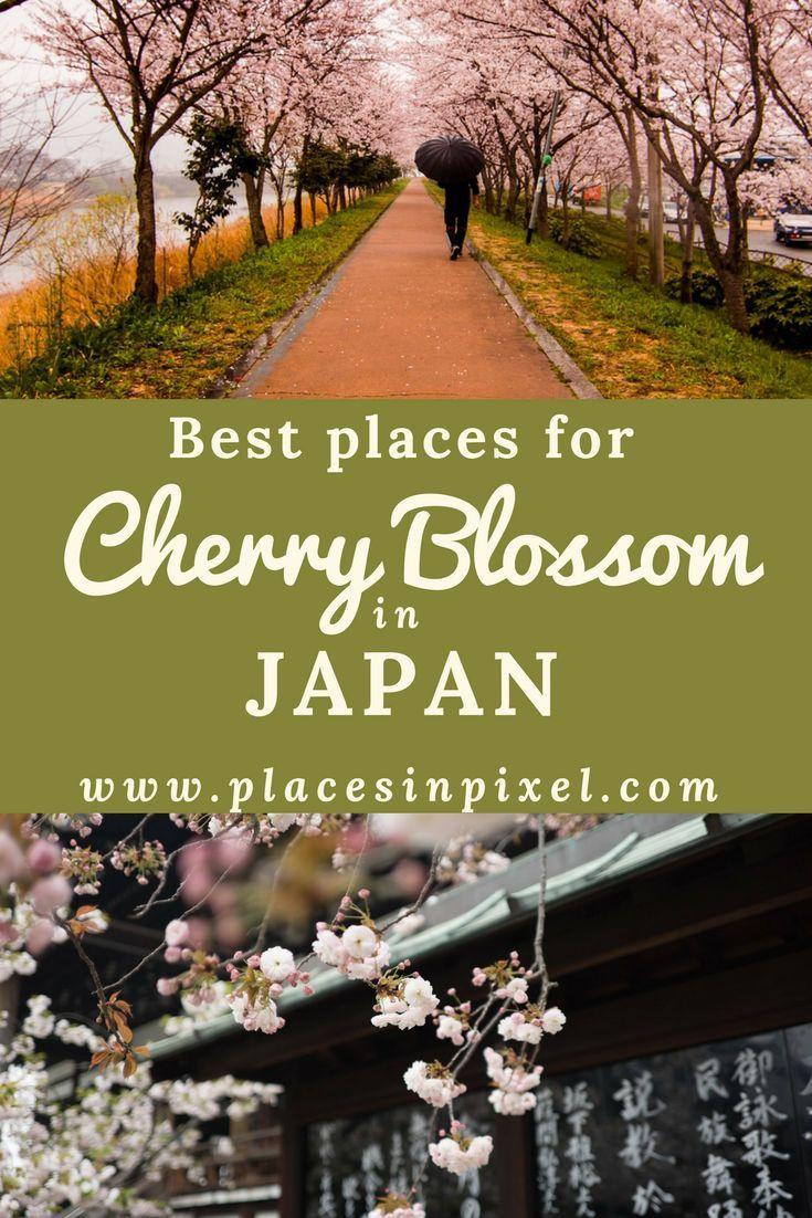 Hanami Cherry Blossom Festival In Japan Travel Photography Japan Cherry Blossom Japan