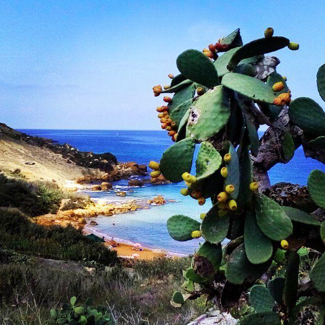 Nel caso vi foste persi il post su Malta 🚣 o stiate progettando di andarci in primavera..nel link trovate anche come raggiungere le spiagge top!⬆🔝 Questa è San Blas a Gozo!😍❤ . . . #maltagozo #Malta #gozo #unlimitedmalta #wanderlust #travelgram #passionpassport #visitgozo #travelblogger #lowcost #traveldestination #dowhatmakesyouhappy #igersmalta #yallersmalta #goexplore #beaches #visitmalta