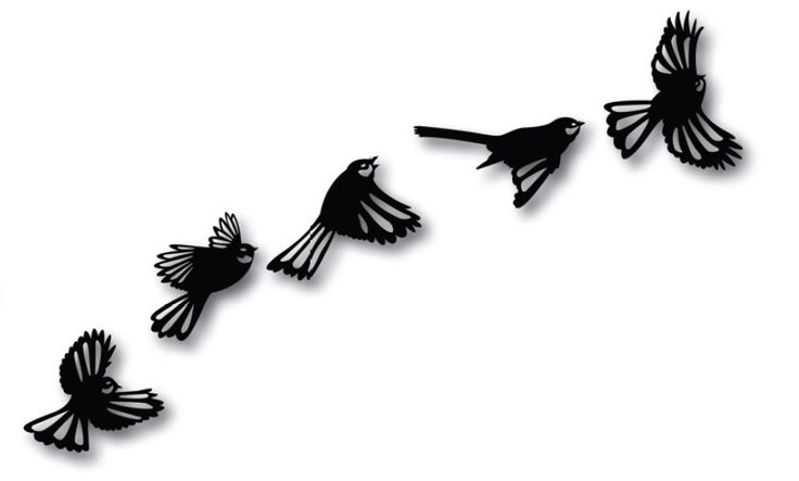 Set of 5 flying fantails, approx 15cm wide each fantail. Available in Brushed Silver or Gloss Black. Great value at just $39.90 for the set.