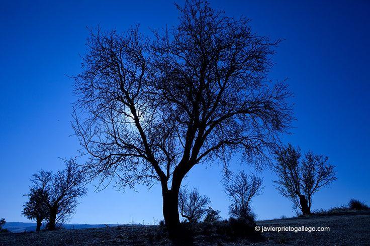 La Senda de los Almendros: un paseo a pie por las riberas de Castronuño (Valladolid)