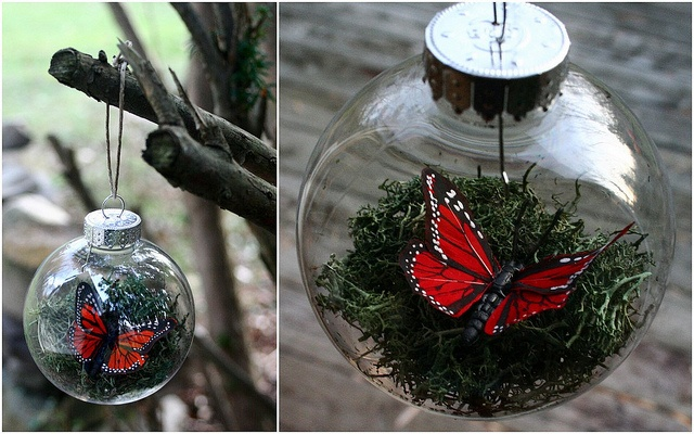 Butterfly Terrarium Ornament: Crafty Stuff, Christmass Stuff, Butterflies, Butterfly Art, Butterfly Terrarium, Terrarium Ornaments, Christmas Ideas, Craft Ideas, Christmas Breaky