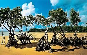 ILHA DE MARAJO' Praia e mangue