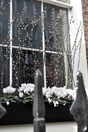 London windowbox ~ pussy willow