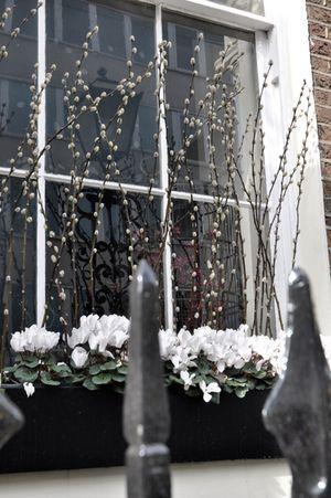 London windowbox ~ pussy willow