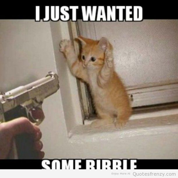 Image result for funny cute cat quotes
