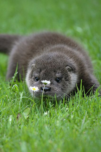 Otter - loutre                                                                                                                                                                                 More