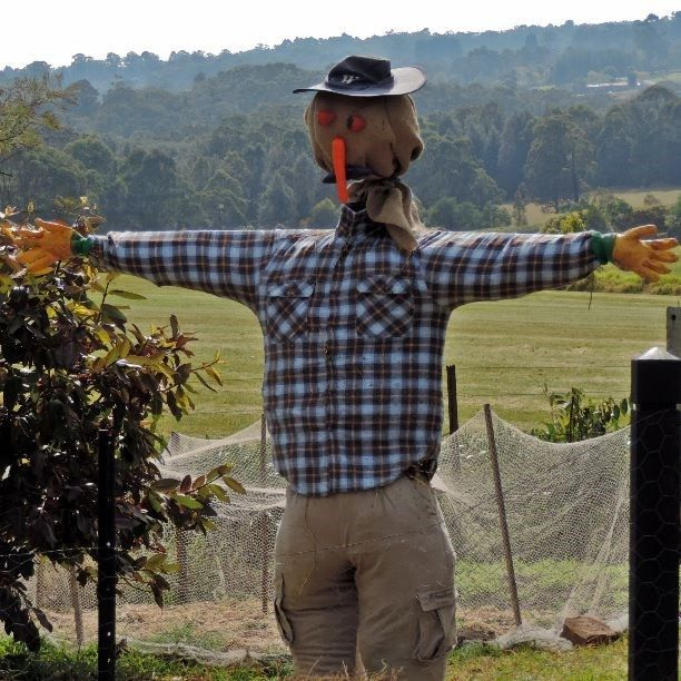 This guy is sure excited the weekend has rolled around. Maybe pay him a visit at Fagan Park. #CaptureTheCover #scarecrow #weekend #Friday