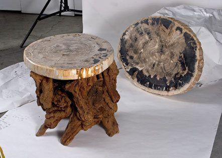 IndoGemstone Petrified Wood Slabs for sale