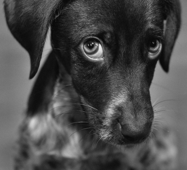 """THE definition of """"puppy dog eyes"""""""