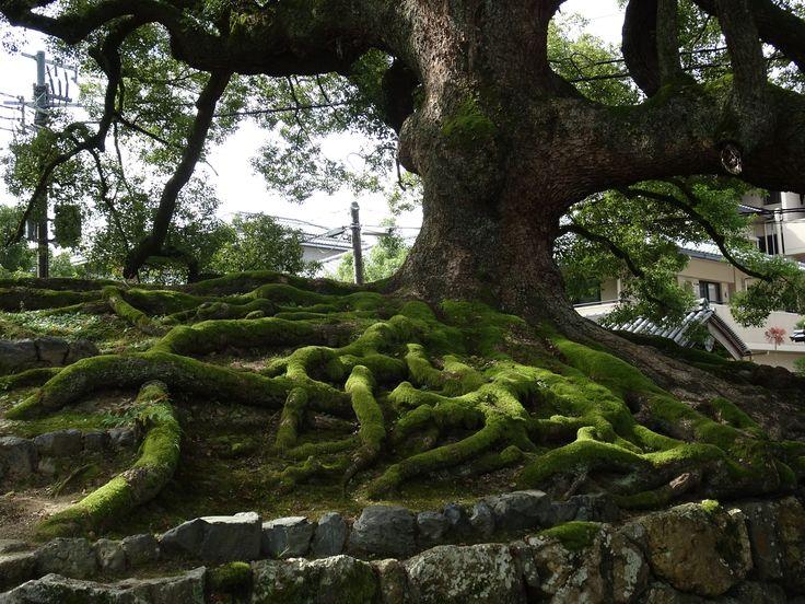 Tree in Higashiyama, Kyoto
