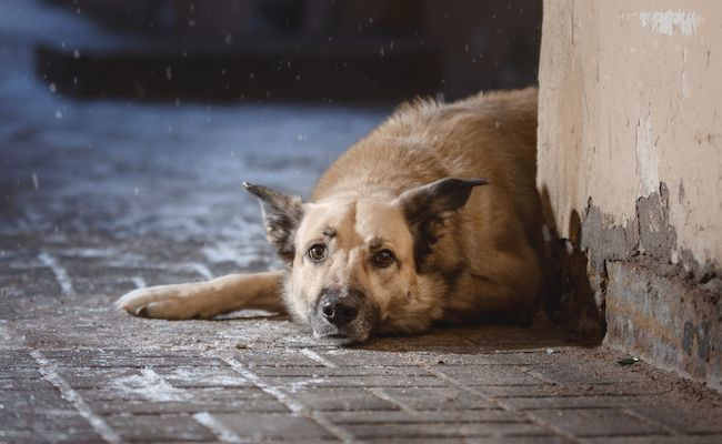 Guatemala Leads The Way With Game-Changing Animal Cruelty Law | Care2 Causes