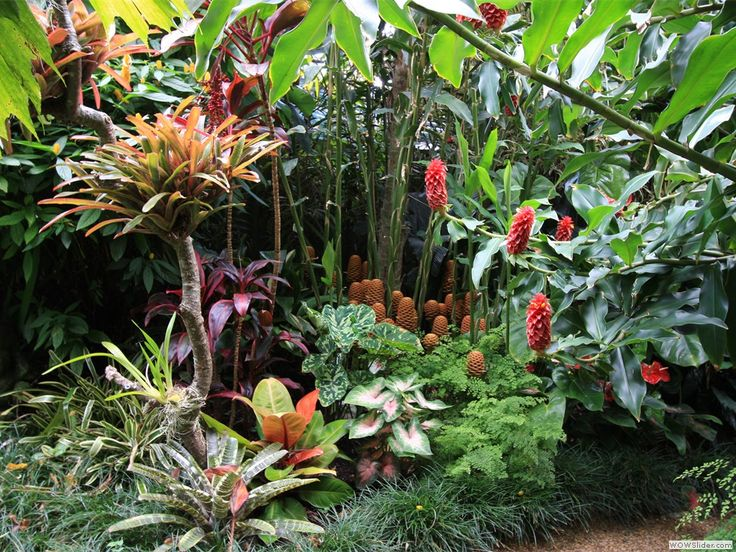 multistory - ginger, cordylines, crotons and monkey grass Need to find ginger for our garden...
