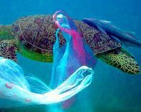 Supermarkets should only use biodegradable plastic bags!