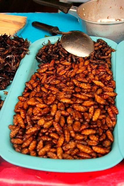 When you think of Thailand, you think of food; good food and strange food. This is some of the strange, bug pupas. Could get myself to try these. But... lots were selling so many people eat 'em up. -  Photo by Amy Laurel Hegy @A Tale of Two Tramps
